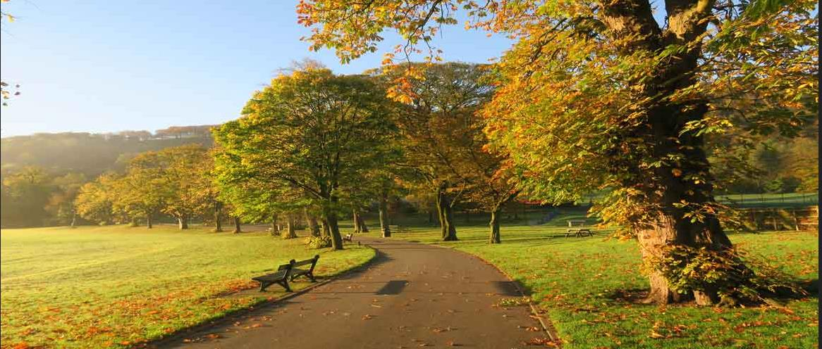 Centre Vale Park Image of a row of trees next to a path